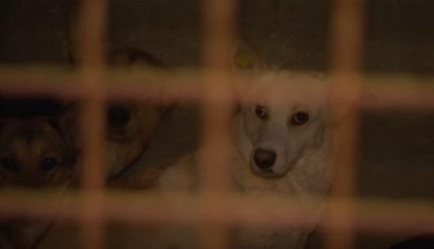 Ветеринарам довелось  усыпить собаку после издевательств живодера